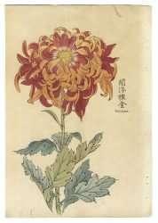 Keika Hasegawa - Enbudagom, 1893 (From One Hundred Chrysanthemums Series)
