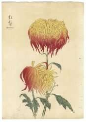 Keika Hasegawa - Benikaburo, 1893 (From One Hundred Chrysanthemums Series)