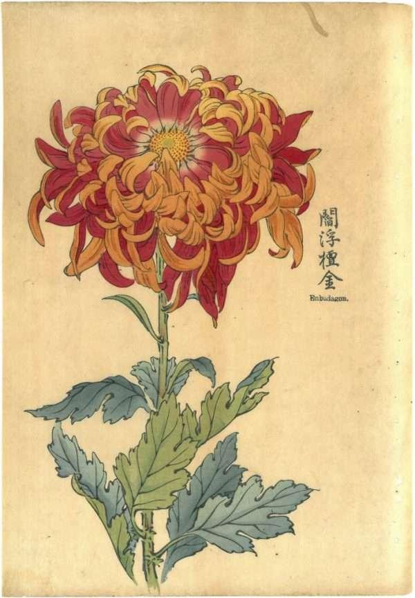 Keika Hasegawa – Enbudagom, 1893 (From One Hundred Chrysanthemums Series)