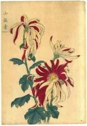 Keika Hasegawa - Shogindai, 1893 (From One Hundred Chrysanthemums Series)